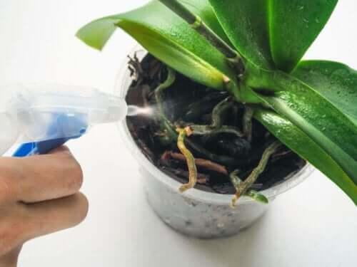 bitkiler için saksı türleri