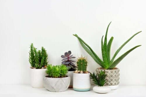 bitkiler, dekorasyon
