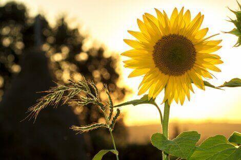 Çiçeklerin anlamları hakkında bilgiler.