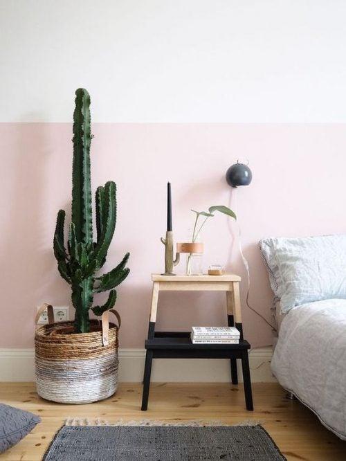 Cactus healthy