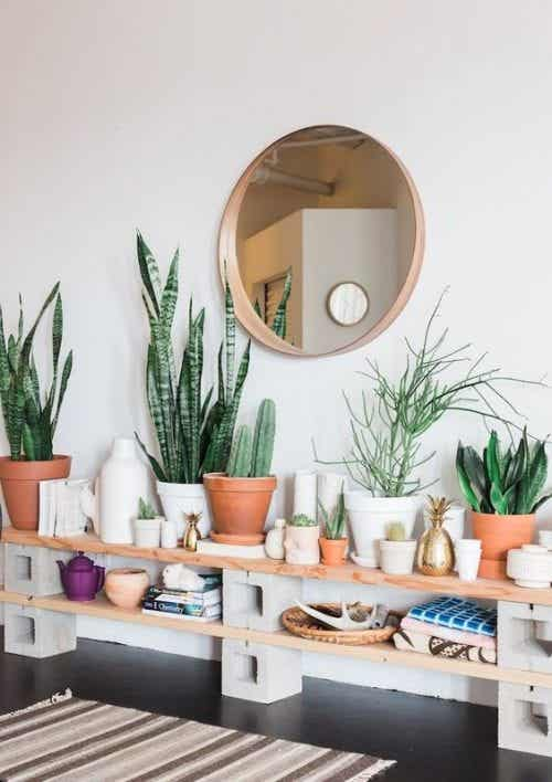 Lovely Plants to Grace Your Entrance Way