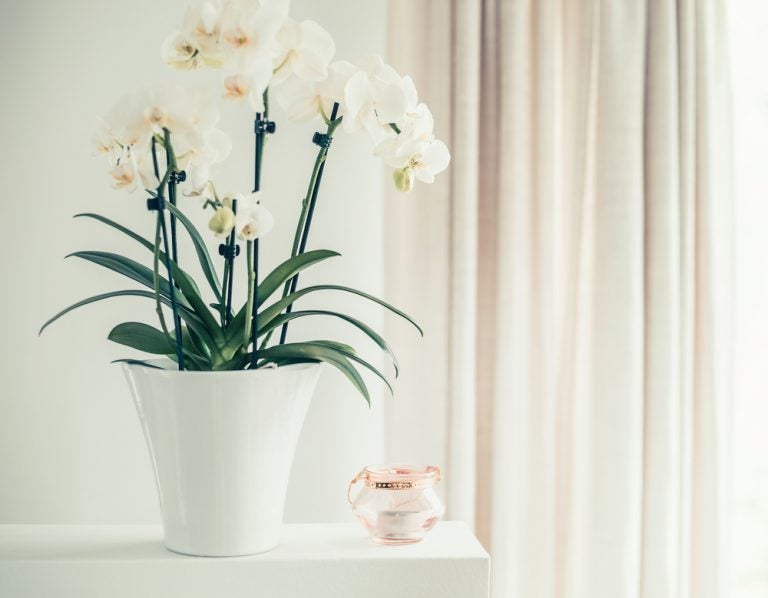 Orchids are one of the most beautiful flowering houseplants, and will add a touch of elegance to your home.