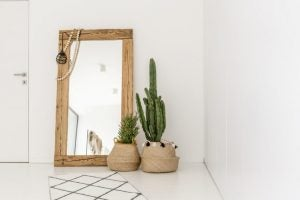 The cactus is a great houseplant for decorating your entrance hall.