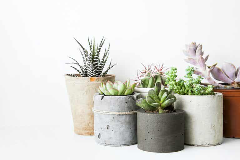 Hardy Houseplants: Pick your Favorites