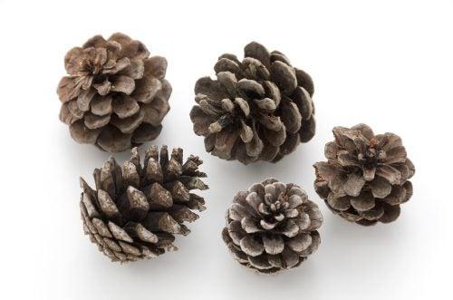 Autumn wreath pine cones