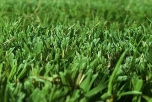 Bermuda grass can make for a really beautiful lawn if you take good care of it.