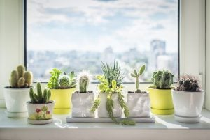 Plants like cacti are a great way to decorate a window.