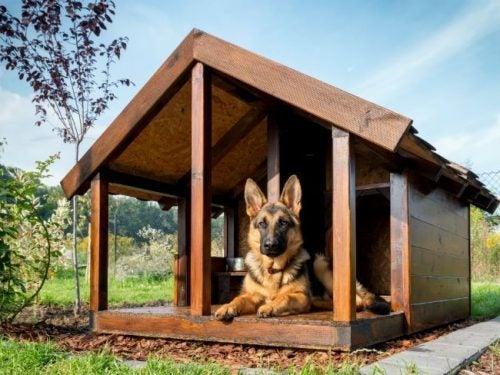 porch dog house