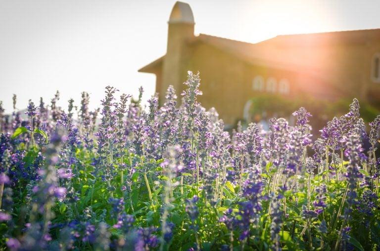 5 Tricks to Make your Home Smell Good