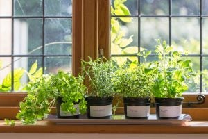 You could decorate your kitchen with plants by keeping various pot plants on your window sill.