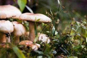 Mushrooms need a constant temperature and plenty of ventilation.