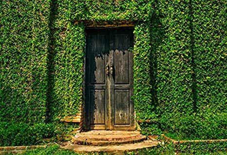 Ideas to Decorate your House with Ivy