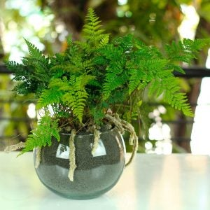 Ferns give a green pop to corners.
