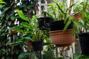 You'll need to trim the roots of the plants in your vertical garden every year.