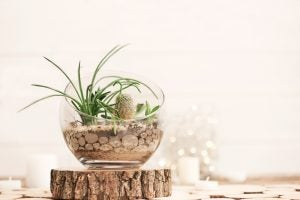 Terrariums are a unique way of bringing nature inside.