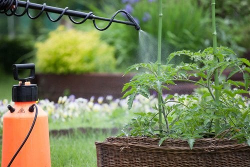You may need to use pesticides when caring for your garden in summertime to avoid plagues and diseases