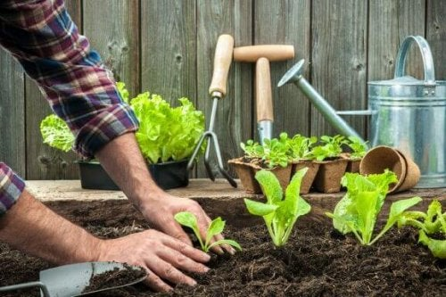 Vegetable gardening at home.