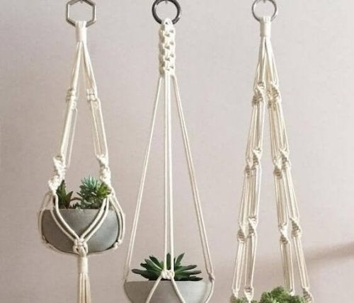 Succulents make up an inside hanging garden