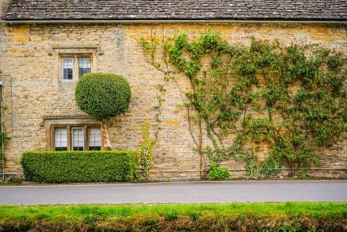 Types of Climbing Plants for Your Garden