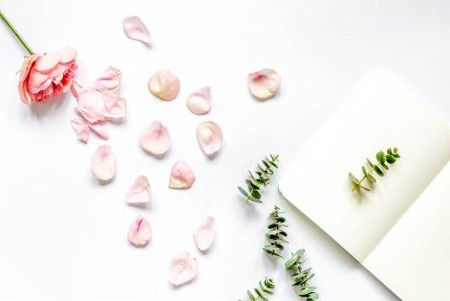 4 Ideas for Decorating with Flower Petals