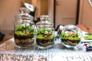 Glass jars containing plants.