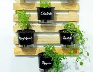 Herb plants hanging from a wooden pallet.