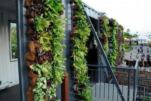 hanging garden tips