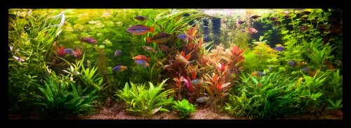 Home Aquarium Tips