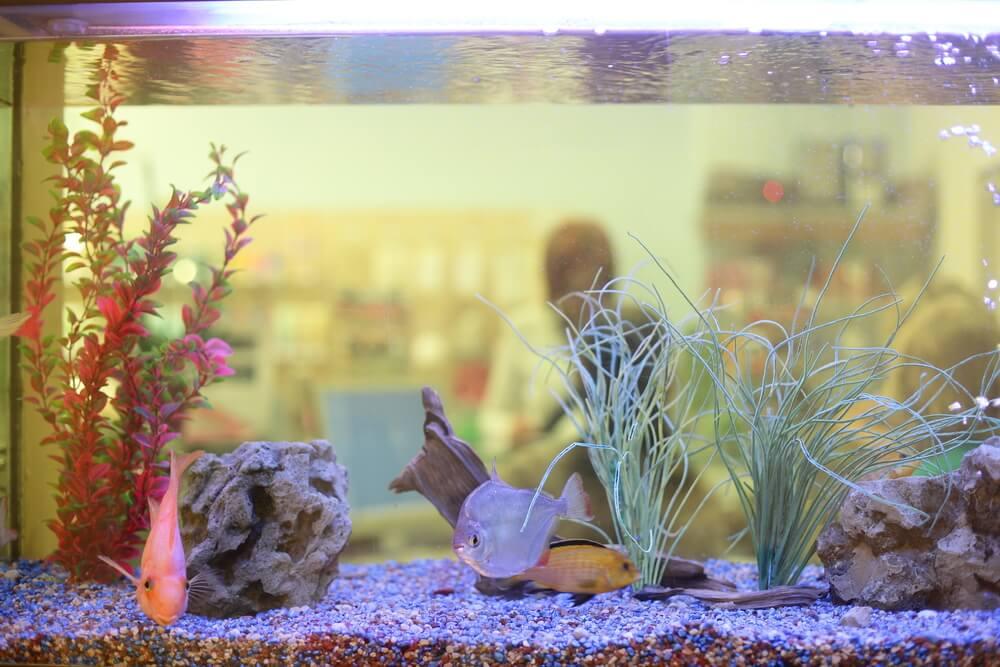 home aquarium tips