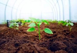 온실: 우리의 식물을 위한 따뜻한 보금자리 04