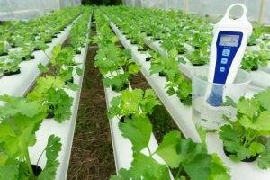 온실은 식물을 기르기에 완벽한 곳이다.