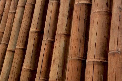 Guadua Bamboo - A Trendy Material
