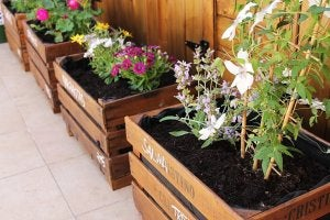 Recycled wooden planters.