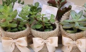Rustic-style plant pots.