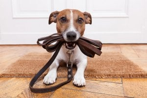 Training is essential if you want to stop your pet destroying your home.