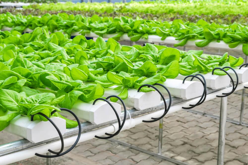 hydroponic garden basin