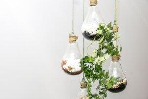 DIY terrarium with recycled light bulbs.