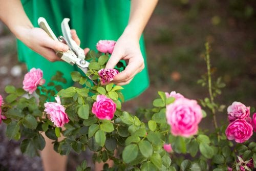 Pruning Your Garden: Learn With Us