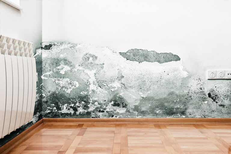 Types of Moisture Problems that Can Affect Your Walls