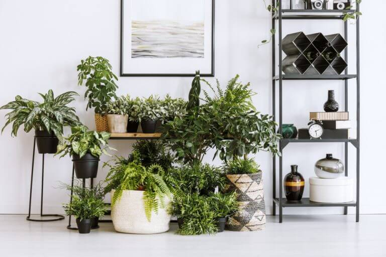 Indoor plants are a crucial part of the decor in a happy house