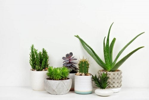 Succulents - A New Natural Obsession