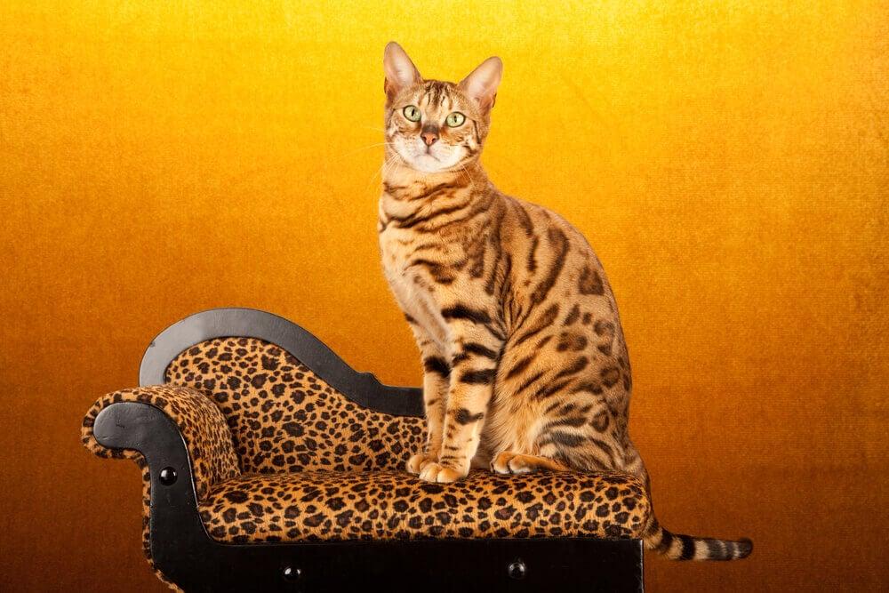 leopard print impact