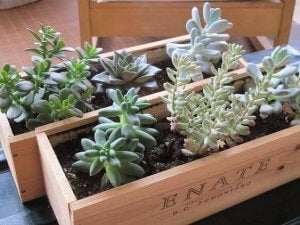 Wine crate planters.