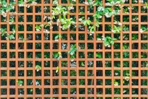 Garden trellis vertical garden.