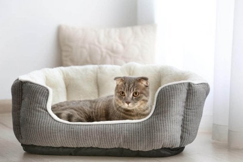 A cat with a bed which helps makes you home a pet-proof and pet-friendly home.
