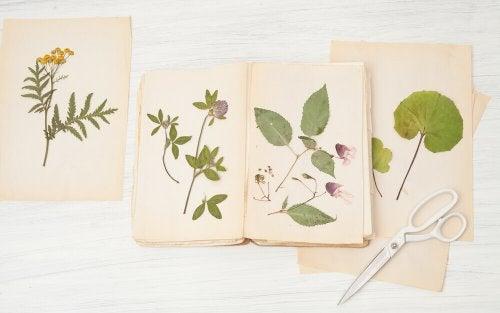 A few herbariums.