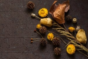 Brown and yellow dried leaves and flowers