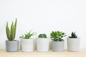 Green plants in white flowerpots