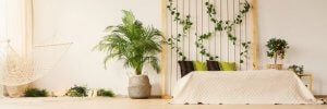 Plants give your home light and color