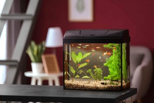 How to Decorate Your Fish Tank - Designs and Resources